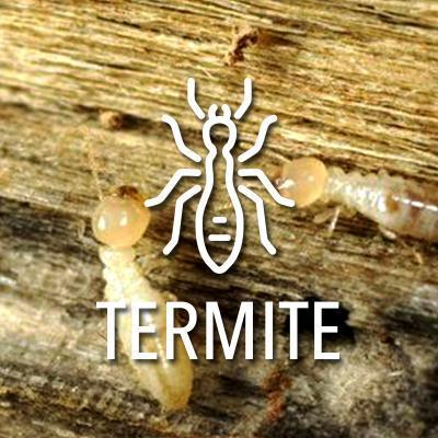 diagnostic immobilier termites